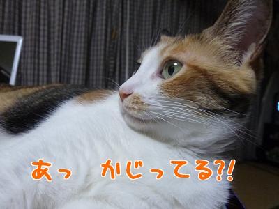 P1020907編集②.jpg