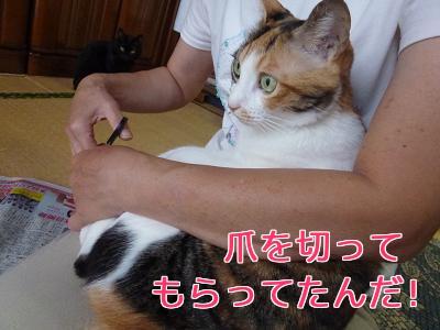 P1040133編集②.jpg