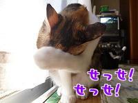 P1040628編集②.jpg