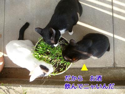 P1050193編集②.jpg