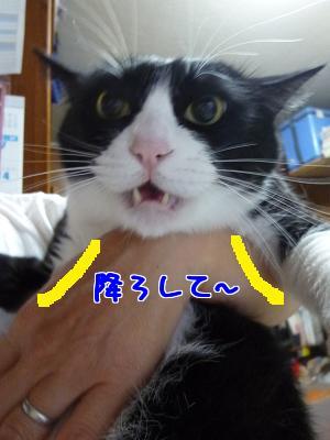 P1070066編集②.jpg