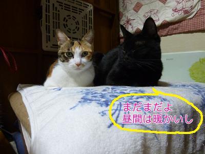 P1070409編集②.jpg