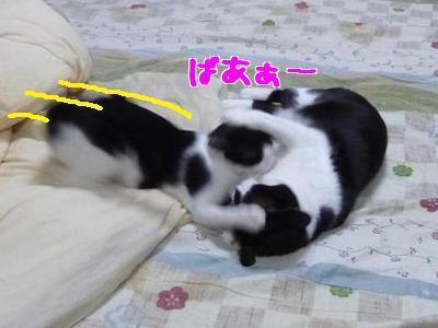 P1070566編集②.jpg