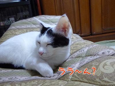 P1070933編集②.jpg