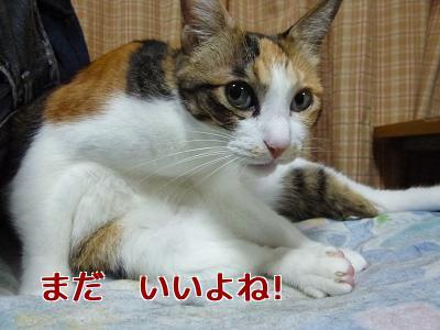 P1070958編集②.jpg