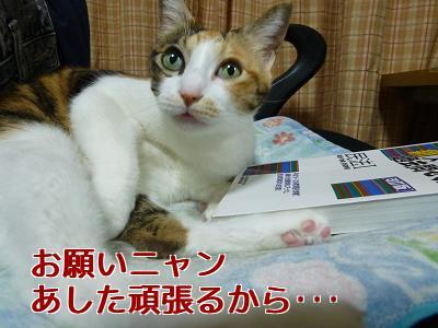 P1070985編集②.jpg