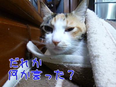 P1080854編集②.jpg