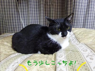 P1080936編集②.jpg