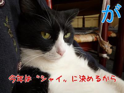 P1090219編集②.jpg