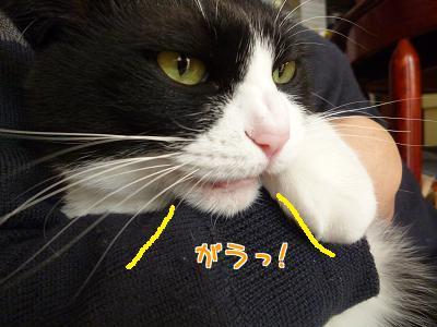 P1090235編集②.jpg