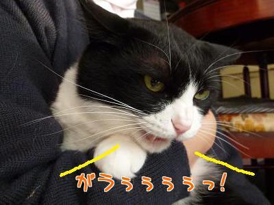 P1090238編集②.jpg