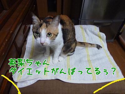 P1100065編集② (2).JPG
