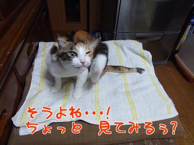 P1100074編集②.jpg