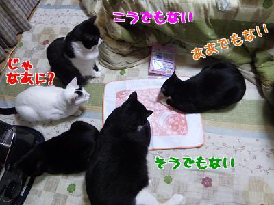 P1100621編集②.jpg