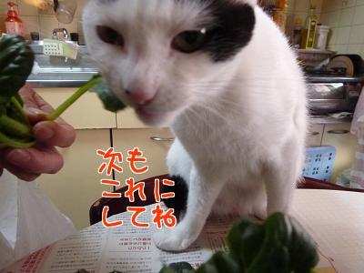 P1110024編集②.jpg
