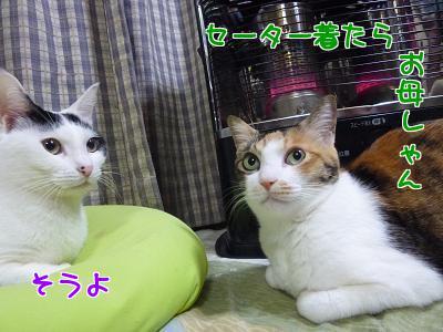 P1110195編集②.jpg