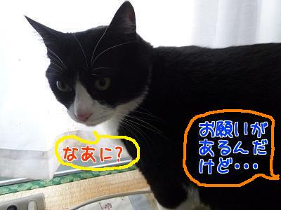 P1110368編集②.jpg