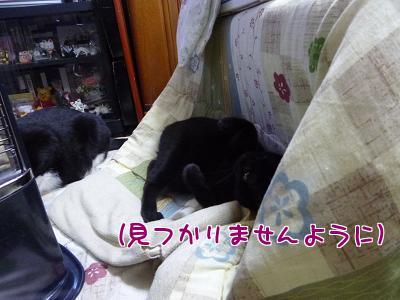 P1110749編集②.jpg