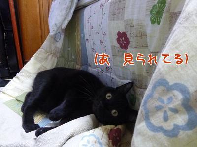 P1110750編集②.jpg