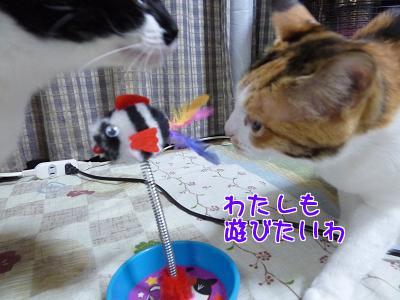 P1120068編集②.JPG