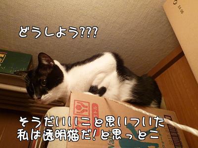 P1140299編集②-1.JPG