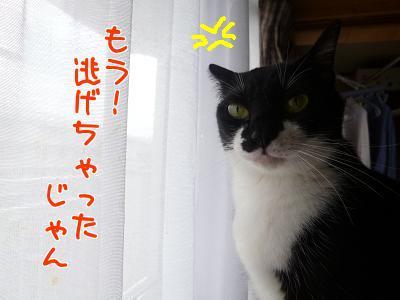 P1140317編集②.JPG