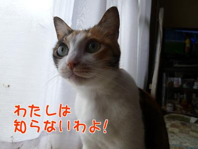 P1140413編集②.JPG