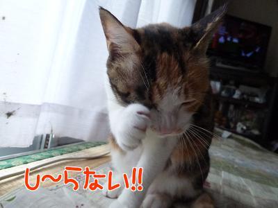 P1140416編集②.JPG