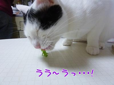P1140570編集②.jpg