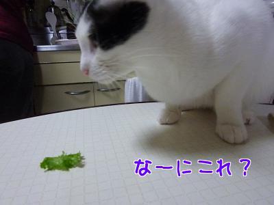 P1140578編集②.jpg
