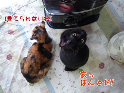 P1140685編集②.jpg