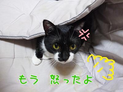 P1150406編集②.jpg