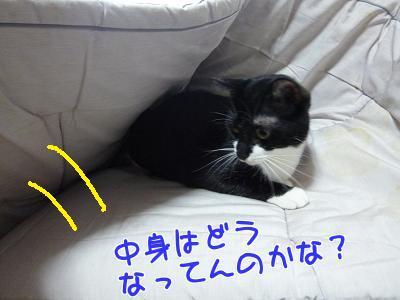 P1150411編集②.jpg