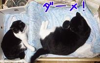 P3044269編集②.jpg