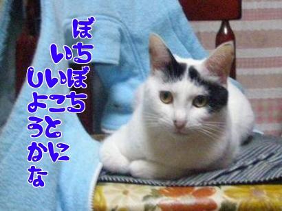 P3240576編集.jpg