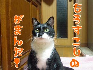 P3240583編集.jpg