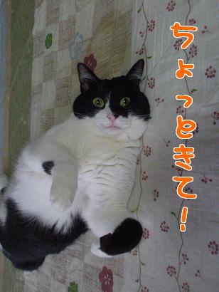 P4081503編集②.jpg
