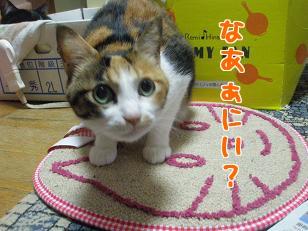 P4091591編集②.jpg
