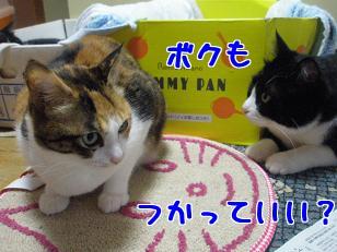 P4091597編集②.jpg