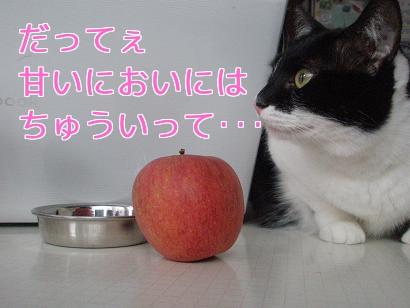 P4171802編集②.jpg