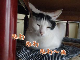 P4232085編集②.jpg