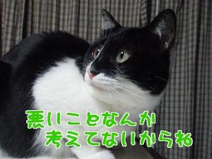 P5022688編集②.jpg