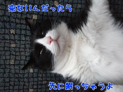 P5093186編集②.jpg