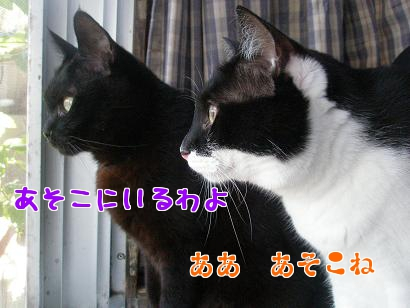 P5173476編集②.jpg