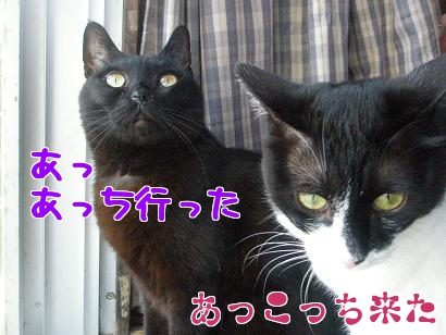 P5173480編集②.jpg
