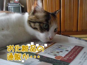 P5223626編集②.jpg