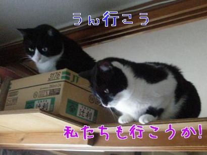 P5303746編集②.jpg