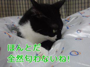 P5303784編集②.jpg