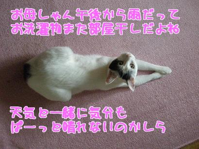 P6033882編集②.jpg
