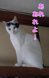P6054033編集②.jpg